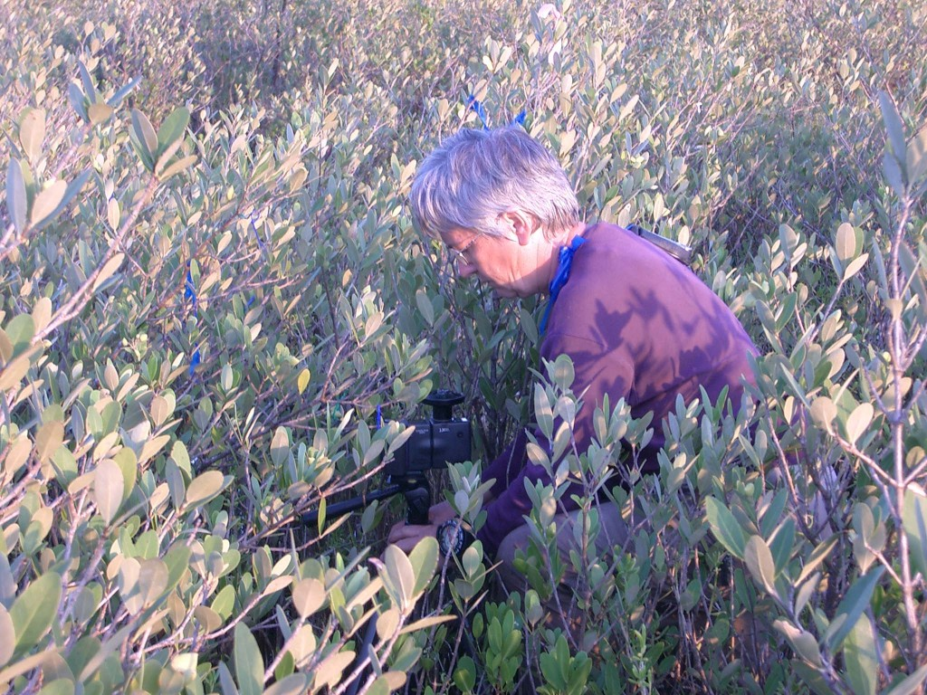 Image: Candy Feller in a field of dwarf mangroves. (Credit: Anne Chamberlain)