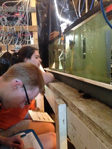 Wesley and Martinez watch fish tanks during one of their lab's projects.