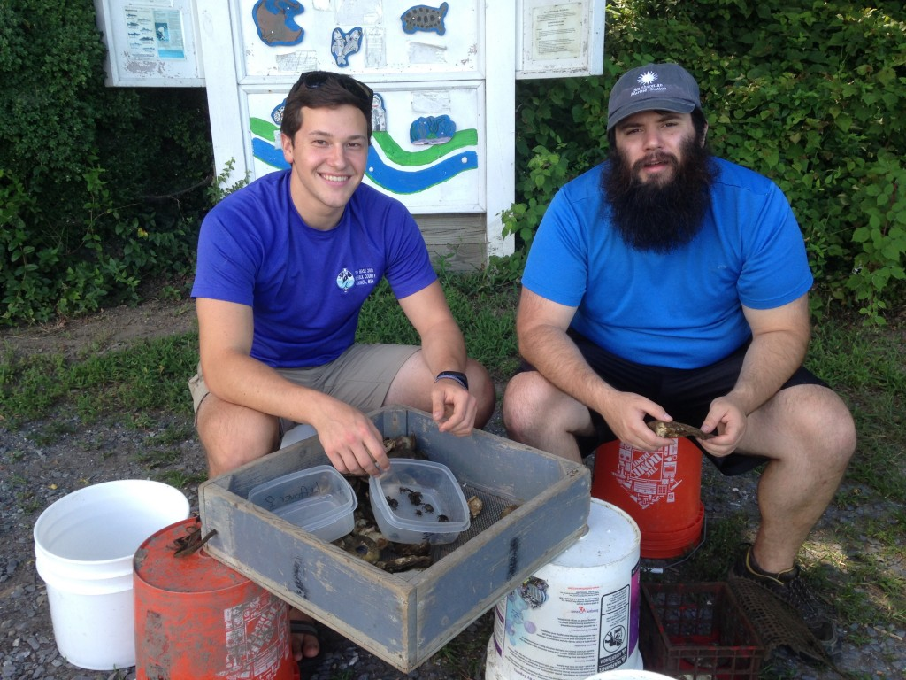 "Connor Hinton and Darin Rummel sort through a ""crab condo."" (SERC)"
