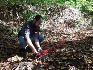 Image: SERC research associate Chris Patrick lays out a mesh of leaf litter to measure decomposition. (Credit: SERC)