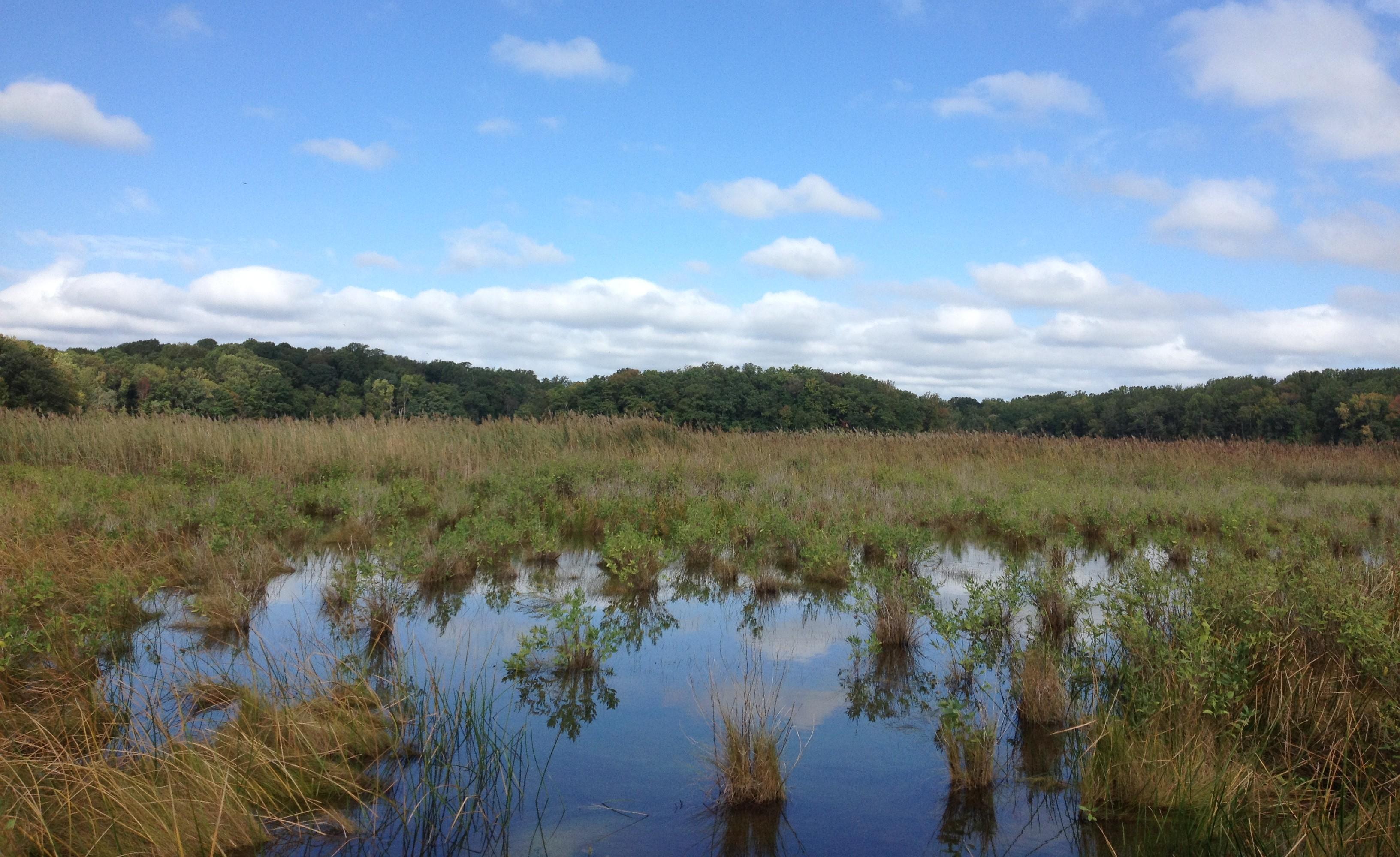 SERC's Global Change Research Wetland (SERC)