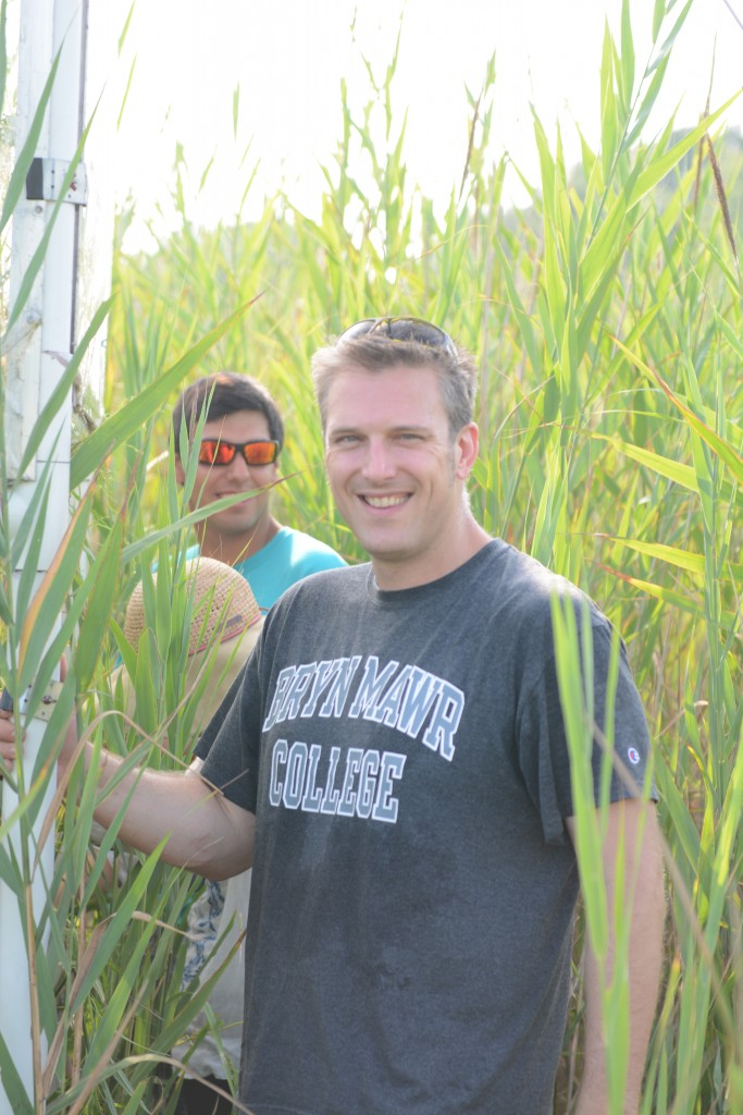 Image: Ecologist Tom Mozdzer stands in a patch of Phragmites in the Global Change Research Wetland. (Credit: Kim Holzer)