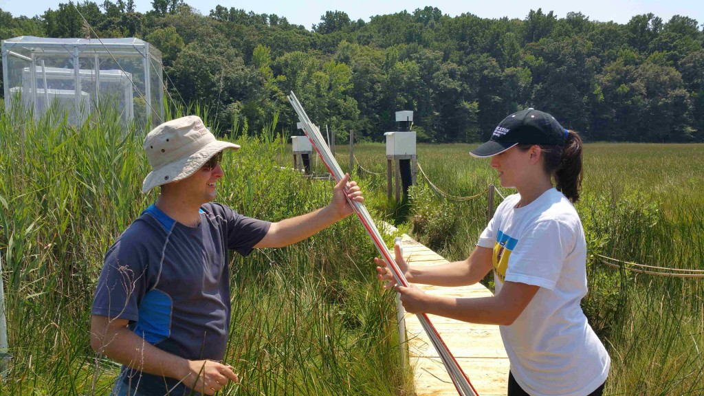 "Image: Josh Caplan (left) and volunteer Katelyn Williams do Phragmitesfield work during ""Marsh Madness,"" the two-week data collection blitz on the Global Change Research Wetland every summer. (Credit: Tom Mozdzer)"