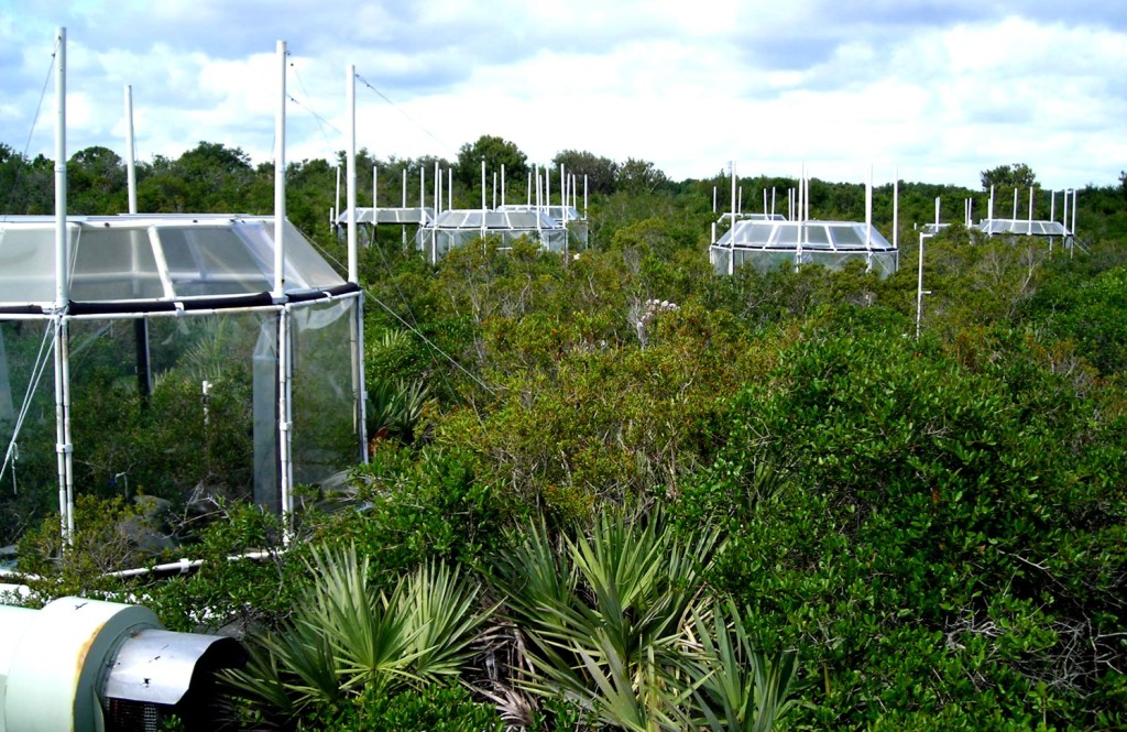 Experimental chambers in Florida scrub oak forest