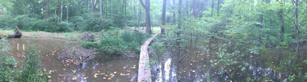 Muddy Creek post-restoration