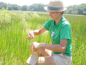 Scientists inspects plant on marsh.