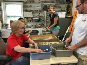 Citizen scientists washing artifacts