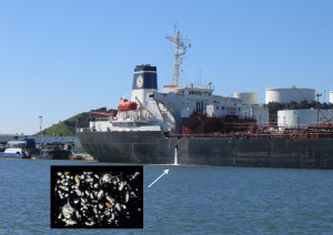 Ship discharges ballast water. Inset: Small organisms inside ballast water. Inset: Small and microscopic species that often live in ballast water.