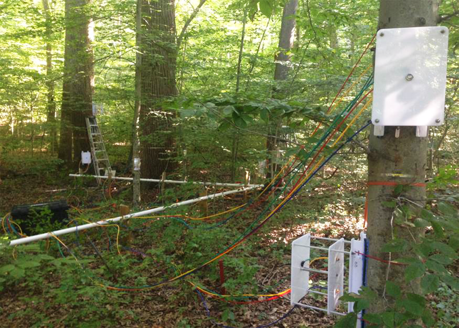 White chambers attached to tree trunks. Multi-colored tubes run from the chambers to a black box in the undergrowth.
