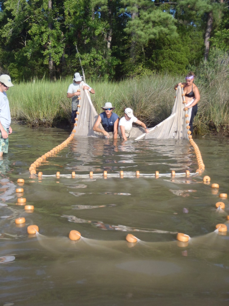 Researchers work together to pull in a net at a grassy shoreline.