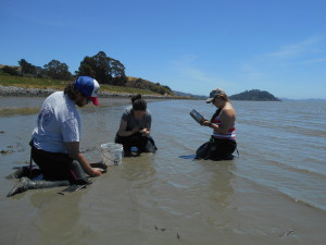 Three scientists kneel in the mudflats looking for clams.