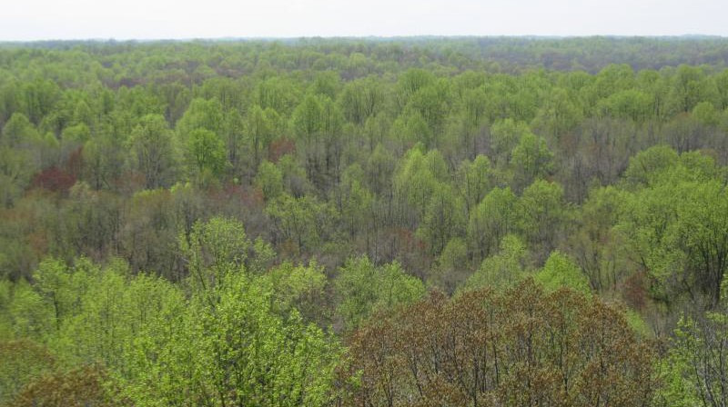 Aerial shot of forest canopy