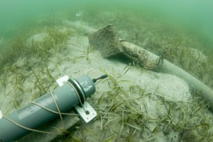 Acoustic recorder by seagrass bed